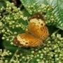 Noord Sumatra Natuur