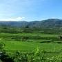 Sulawesi Classic
